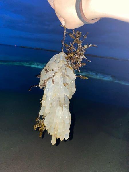 海に落ちてたんですけど、この透明でぶよぶよしてるのわかる人いますか?