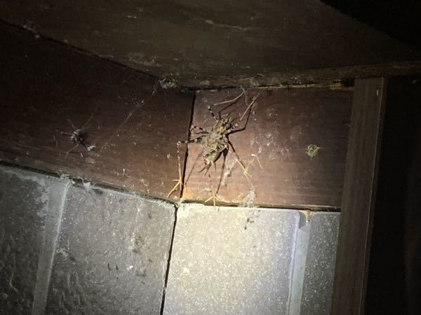 この虫はなんでしょうか.. 場所は山梨県です。。
