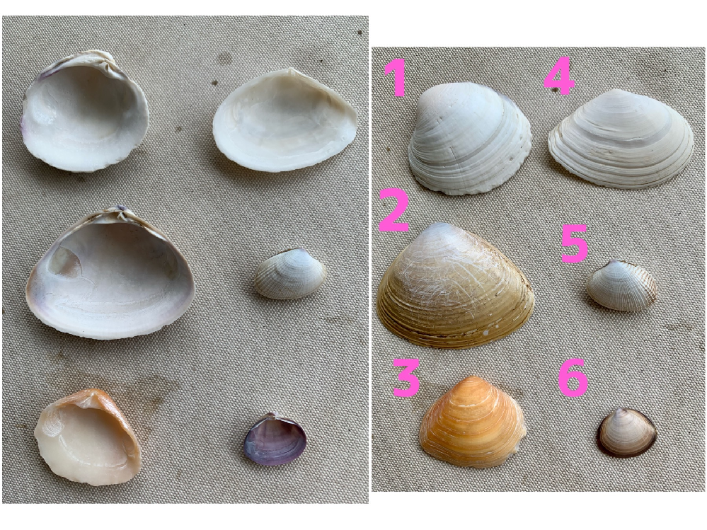 娘と、千葉の検見川浜で拾いました。 貝殻の種類、全部でなくてもよいので、分かる方教えてください! よろしくお願いします^_^