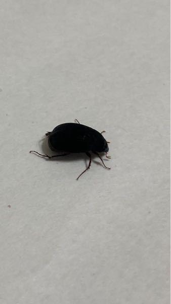 これは何という虫でしょうか? 回答お願いします。