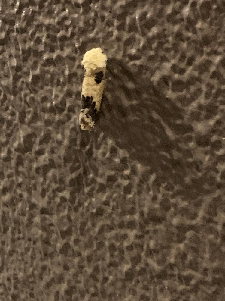 この虫ってなんですか?幼虫?さなぎ?