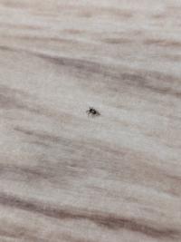 直径2ミリ位です ダニですか? クモですか?
