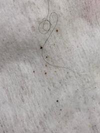 毎日掃除機をかけ拭き掃除もしているのに拭き掃除の後、シートを見ると何か潰れた? ような物がついています。これは何でしょうか。虫か、虫のフンなのでしょうか。綺麗好きなので掃除は頑張っているつもりなのに悲しいです。生後5ヶ月になる子供もいるのでこの正体が知りたいです、、