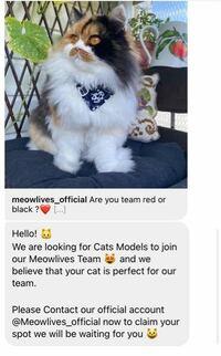 こんにちは Instagramで猫の画像を投稿しています 今突然このようなDMが送られてきたのですが翻訳できる方いらっしゃいますか?