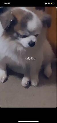 この子ってどの犬種かわかりますかね?それともミックス犬とかですかね??