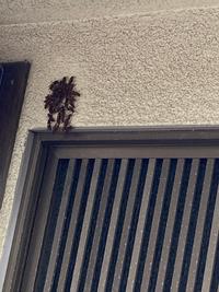 家の玄関扉の上に黒っぽい蜂のような虫が何匹も集まっているのですが、これは蜂が巣を作ろうとしているのでしょうか…?また、これは何という種類の虫ですか?