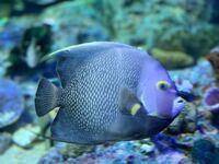 この魚の名前わかる人いますか? 水族館で撮影したものです。