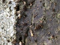 花壇に白い虫が大量発生しています 春にチューリップが咲き、球根を取った際も虫に球根を食べらていましたがその後虫はいなくなったものと思っていました。 今になり、花壇に水やりをしていたらまた虫を発見…  アリやダンゴムシの赤ちゃんみたいなのもいますが、その中でも白い虫が大量発生していて気持ち悪いです…  シロアリなのか…調べてみても判別できず…  どなたか対処法を含めて教えて頂けませんか⁇