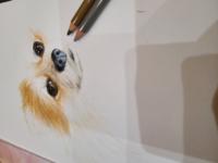 【中学生イラスト】 中1です。 うちの愛犬の絵を描いてみました。 途中経過ですが、評価お願い致します。 色鉛筆とコピックを使いました。