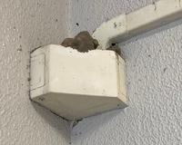 これはアシナガバチの巣でしょうか?? 検索した画像と少し違って… アシナガバチらしきハチが一月前くらいに作っていたのですが、最近は見ません。大きさも変わりなしです。 壊しても大丈夫ですかね??