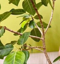 この植物の名前わかる方教えてください。