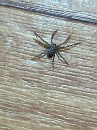 なんの蜘蛛でしょうか。 害ありますか? 教えてください。