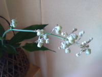 雑草の中に咲いていたのですが、この植物は何でしょうか? わかる方いらっしゃったら教えて下さい。