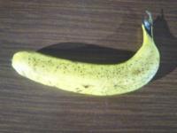 僕はバナナが大好きです...先月お庭にバナナを植えて...毎日お水をあげていますが...全然芽が出ません...どうしてですか?❤。
