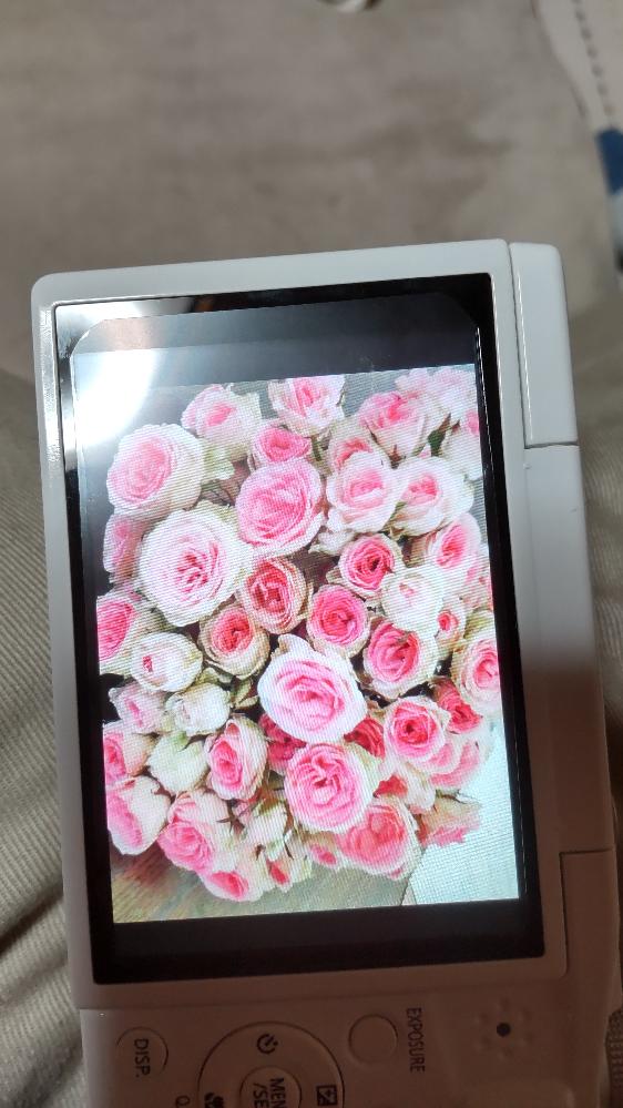 結婚式で使ったブーケですが、こちらの花の名前が分かる方はおられませんか? きれいな白とピンクのバラです。 ミミエデンかとは思いましたが、覚えてないだけかもしれませんが最後にピンクになったか覚えが無く、一輪の大きさも小さかったような気がします。