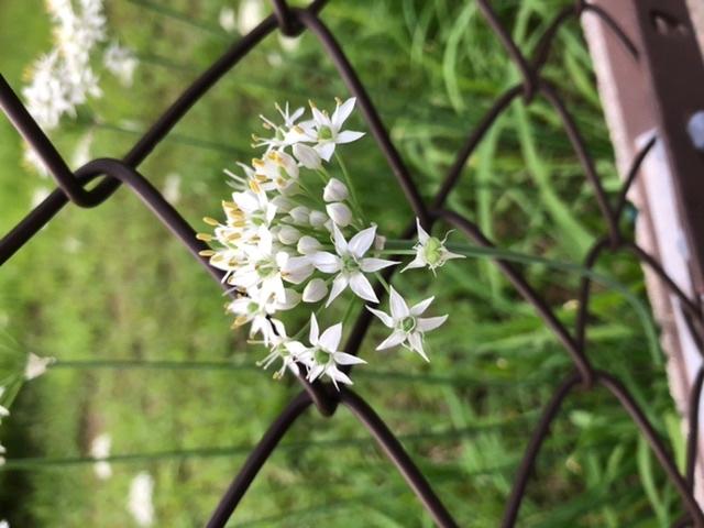 この花は何ですか?