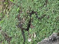 このヘビは何という種類のヘビでしょうか。 見つけた場所は九州の民家近くです。 毒があったら家に入ると大変なので,殺した方が良いのでしょうか。
