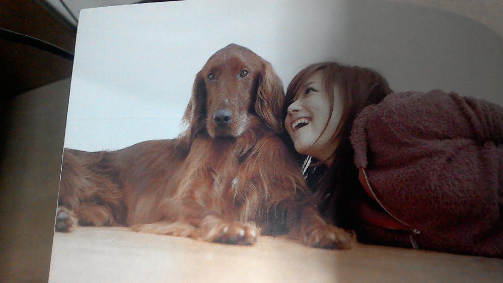 ペット大喜利 この顔を寄せられてる大きなイヌにセリフをつけるとしたらどうなる? (本日9月9日が歌手の大塚愛ちゃんが39歳の誕生日でちなみにコレは愛ちゃんが23歳だった2005年暮れのもので)