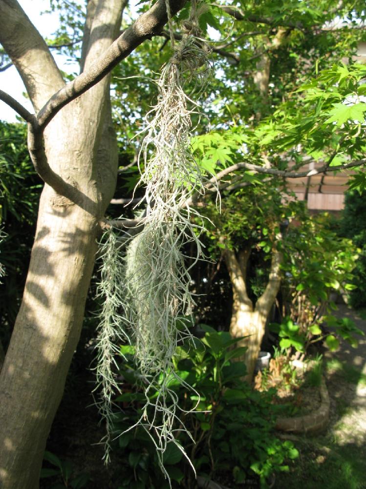 教えてください。写真の植物ですが何という名前かご存知でしたら教えてください。またどの地方(国など)が原産七日も併せてお願いします。よろしくお願いいたします。