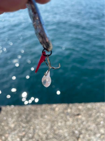 この透明の生き物なんですか? 中に細長いピンクの寄生虫?が居ました 和歌山の加太で釣れました