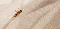 この羽アリ?が部屋にたくさんいるんですけどなんて言う種類ですか? また、大量駆除のやり方を教えてください! 画像はティッシュで潰したやつです