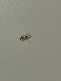 この羽アリ⁈なんの虫だか、どなたか分かる方いらっしゃいますか? 50匹はいました。 なんの虫だか調べても分からずで、駆除の方法が分かりません。 教えていただけると大変助かります。 よろしくお願い致します。