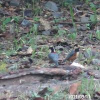 鳥の名前を忘れました、 岐阜県米田白山で、 撮影20210911