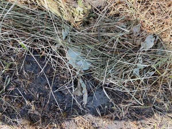 畑だった土地を利用して今作業してます 除草剤をまいたあとに、土に畑の痕跡の 水が流れる凹みがあることがわかりました 土がどろのような(濡れると黒っぽい)素材なので のくぼみにハマると滑ったりこけたりします。 今、枯れた草をのせてます、穴を埋める方法を教えてください。