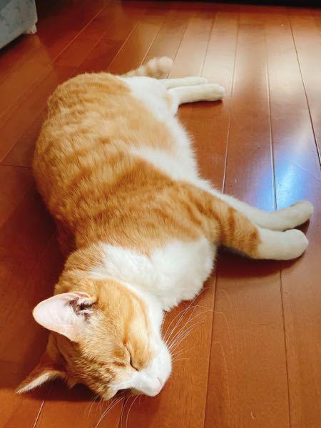 10歳のオス猫がほぼ毎日嘔吐します。 食欲もあり、トイレも正常。 下部尿路疾患持ちでヒルズのc/d マルチケアコンフォートを食べてます。 この状態がかれこれ1年くらい続いていて、病院も何度も通い血液検査・バリウム検査の結果も異常ナシ。 最終的にストレス?という結果です。 今のところ病院から処方された吐き気止めを飲ませているものの、あまり効果が無さそうです。 今日から身内の勧めでアンチノールを飲ませてみましたが、効くと良いな…と。 猫の原因不明の嘔吐に悩んでいる方、アドバイス頂きたいです。 宜しくお願いしますm(_ _)m ちなみに食事台の高さや角度の調整・食事を小分けにして少量ずつ与える等は試してみましたが、効果ナシでした。