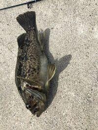 これはなんて言う魚ですか?