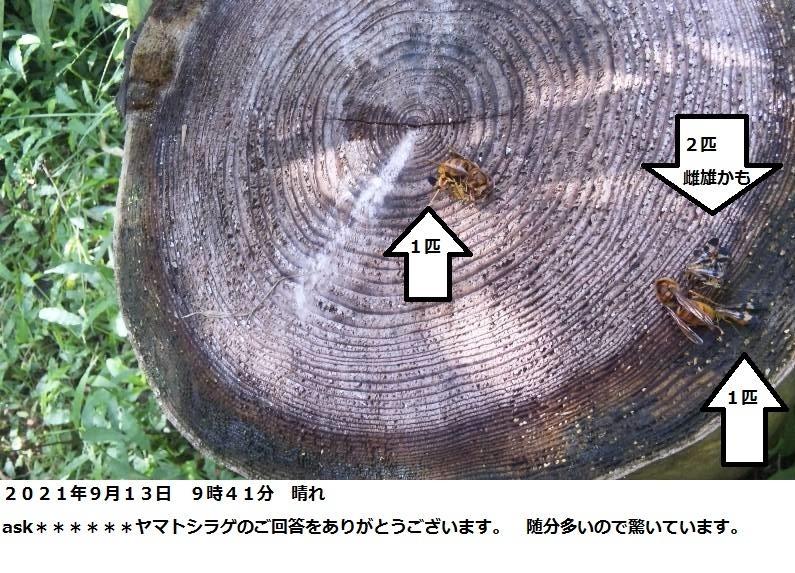 トカゲ?はキイロスズメバチの死んだばかりのものを食べませんか? 千葉県の森の中です。 トカゲ?がちょろちょろしています。 たまたま、日本みつばちの巣箱に来たキイロスズメバチを捕殺したので、 死骸をトカゲの真上からポトッとおとしてみました。 トカゲは見向きもしないのですが、 普通にはトカゲはキイロスズメバチ(死骸)を食べないのですか?