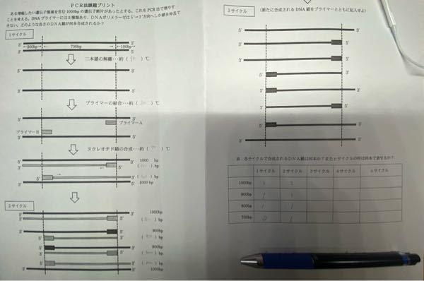 大至急 高二生物 pcr法について、3サイクル、4サイクル、nサイクルの数を教えて欲しいです。よろしくお願いします。
