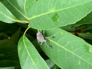 散歩中に見つけました。虫の名前を知りたいです。大阪市内です。 よろしくお願いします。