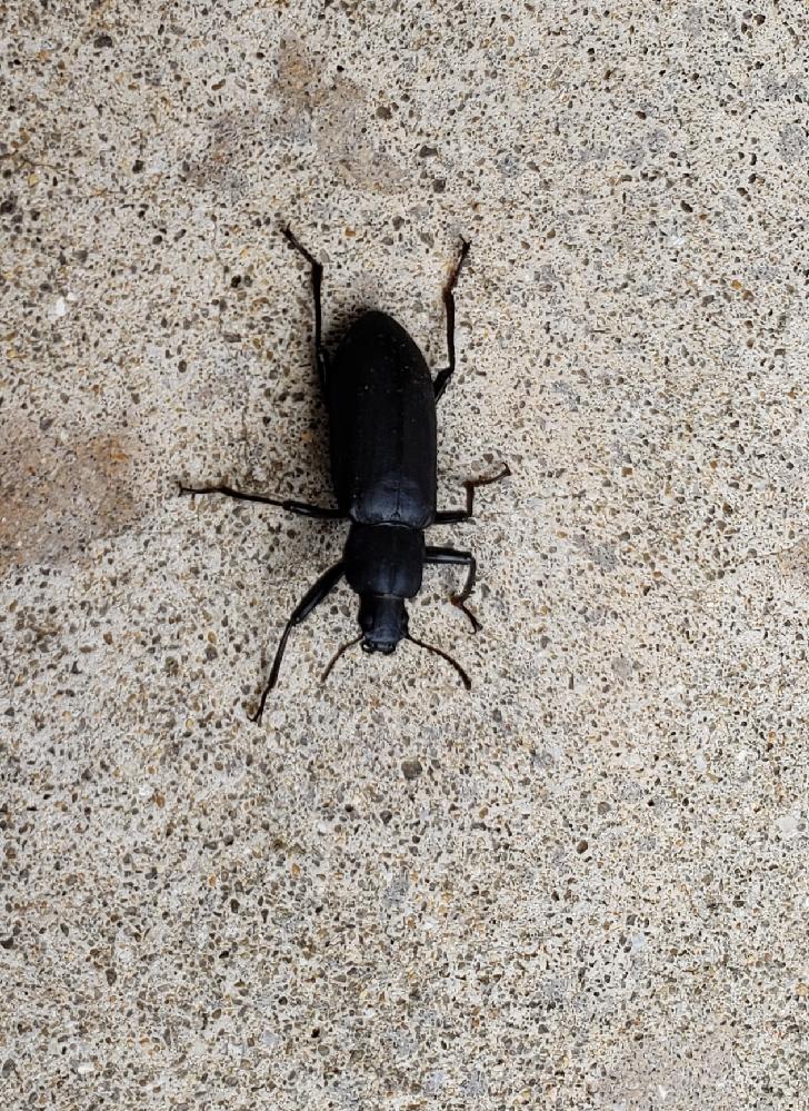 これは何虫ですか?キキキキ?みたいな感じで鳴きます
