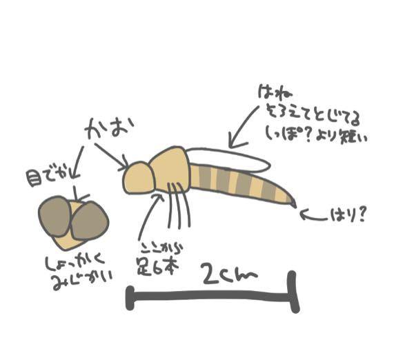 今日学校に出た虫の名前が気になります。 絵も下手だしうろ覚えで申し訳ないのですがこんな感じの虫です。色は本当にざっくりです。 針かどうかは分からないです。