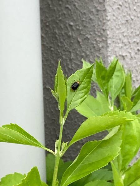 この虫はなんですか?庭の葉っぱに結構ついてるんですがスプレーとかで、駆除した方が良いですか? 害虫なんですかね?