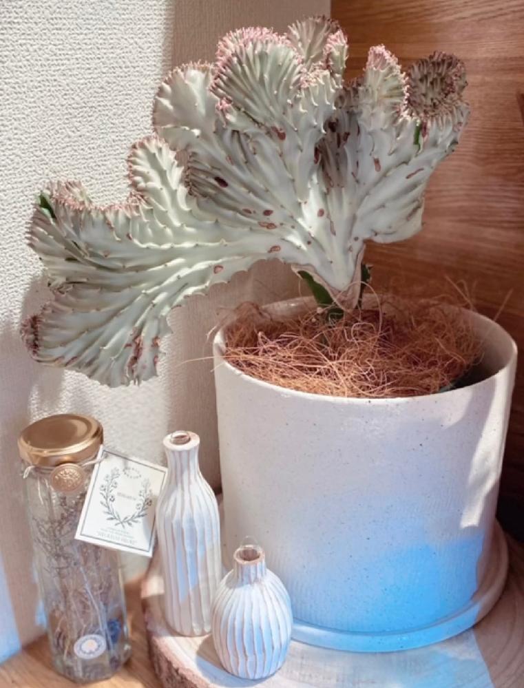 ↓これは何という植物でしょうか?