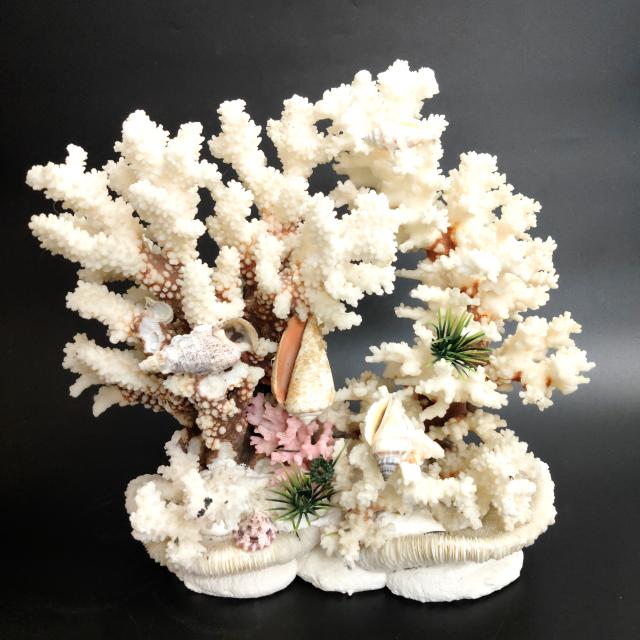 大至急お願いします この珊瑚って希少なんですか?