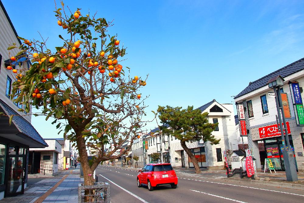 「カキ (柿)」の木というのは、街路樹としても利用するものなのですか? ㅤ 昨年の10月か11月ごろのことです。 タクシーの窓から何げなく外を眺めていたら、数本の街路樹に鮮やかなオレンジ色の果実がたわわについていました。 よく見ると、紛れもなく「カキ」なんですよね。 ㅤ カキは、青柿のうちにもボトボト落っこちるし、熟柿もベチャベチャ落下しますから、街路樹には向いていないようにも思えますが…。 ㅤ ちなみに、検索してみたら、北海道伊達市に有名なカキの並木道があるということは分かりました (貼付画像)。 ㅤ ㅤ