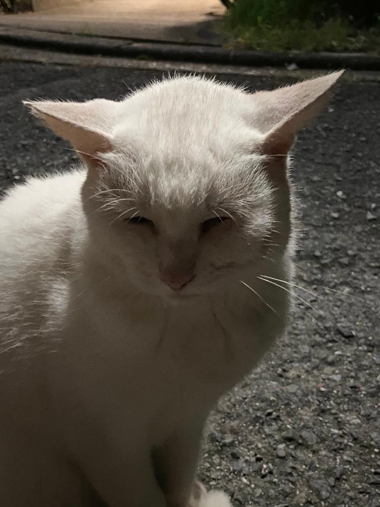 猫の左のほっぺにコブのようなものができています。腫れすぎて左目も細くなっています。 なにかの病気でしょうか?原因がわかる方、猫を飼われている方お力添え下さい( ; ; )心配でたまりません。獣医さんに聞いてください等のご意見は要りません。原因がわかる方のみご回答をお願いいたします。よろしくお願いいたします(><)