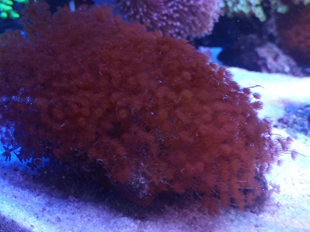 藻の一種と思いますが、こちらの名称と、駆除方法がわかる方おられましたら教えてください。