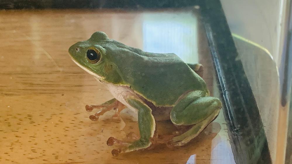 これは何て名前のカエルですか?