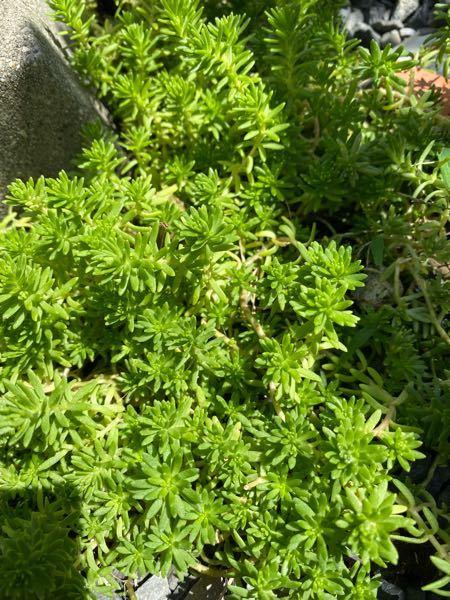 この植物はなんでしょうか。 教えてください。