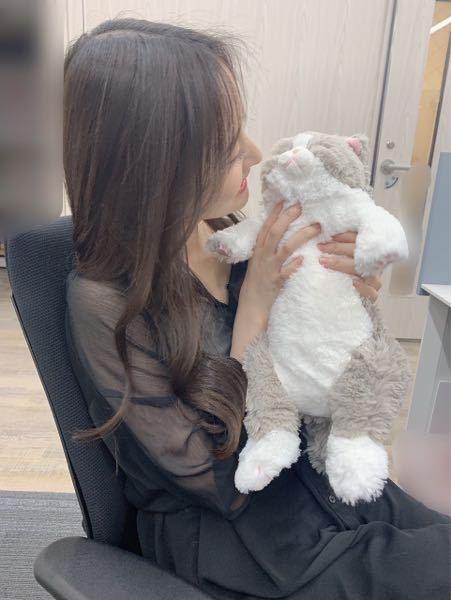 乃木坂の金川紗耶ちゃんが持っている猫のぬいぐるみ何か分かりますか?