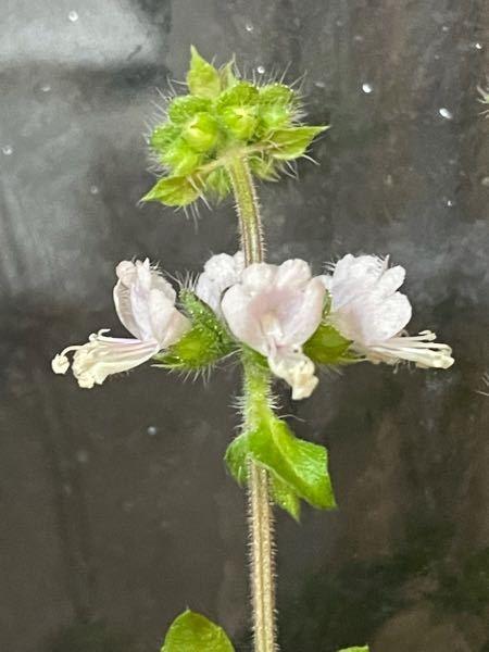 この花の名前がわかる方いませんか?