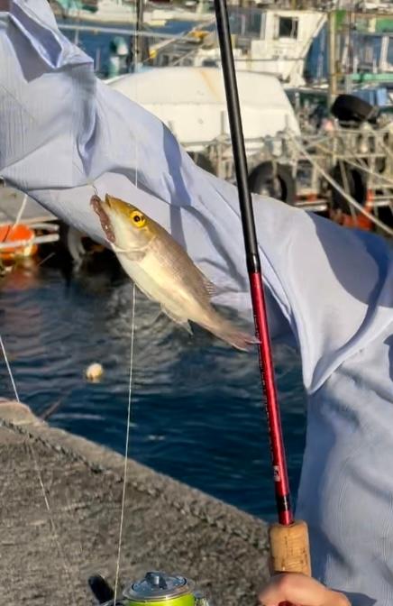 千葉の内房の堤防から釣れた魚の名前が分かりません。教えてくださいっ(><)