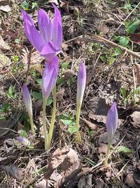 この花は何でしょうか?