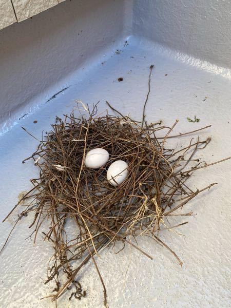 今の時期、バルコニーの下にこの様な巣を作る鳥ってなんですか? 簡易的な巣からしてもともと下に作ったみたいです。