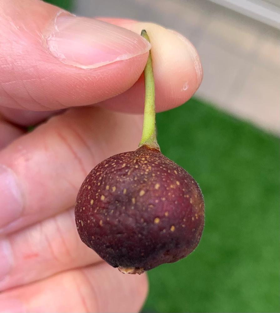 この木の実は、何という名称でしょうか? この実には毒がありますでしょうか?