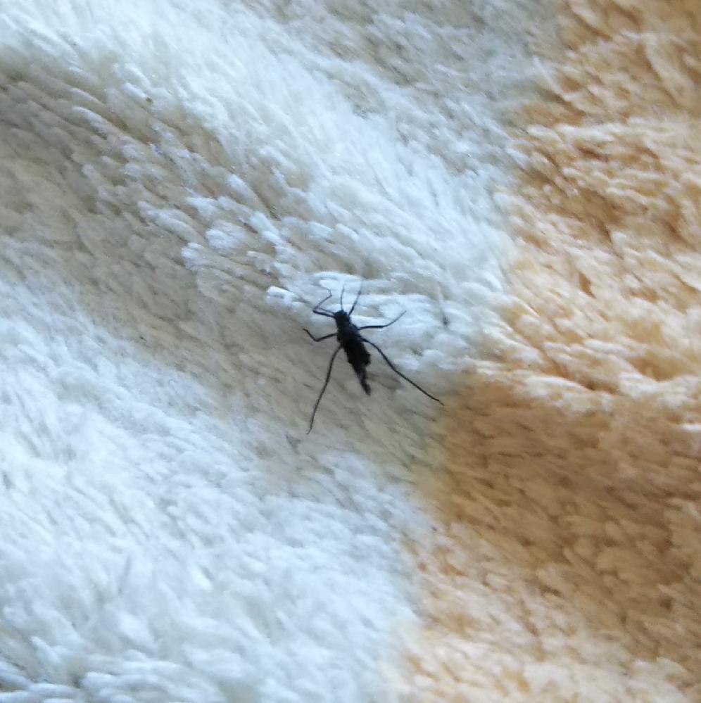この虫はなんていう虫でしょうか? 3~4mmくらいの大きさです。